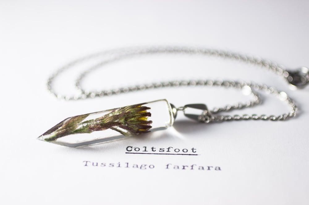 Image of Coltsfoot (Tussilago farfara) - Crystalline Pendant #2