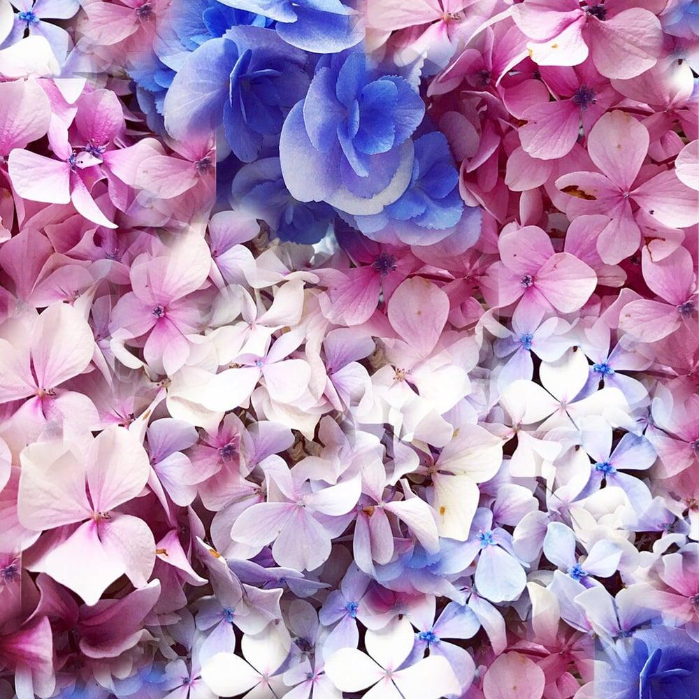 Image of RESERVED - Large Hydrangeas 100% Satin Silk Scarf