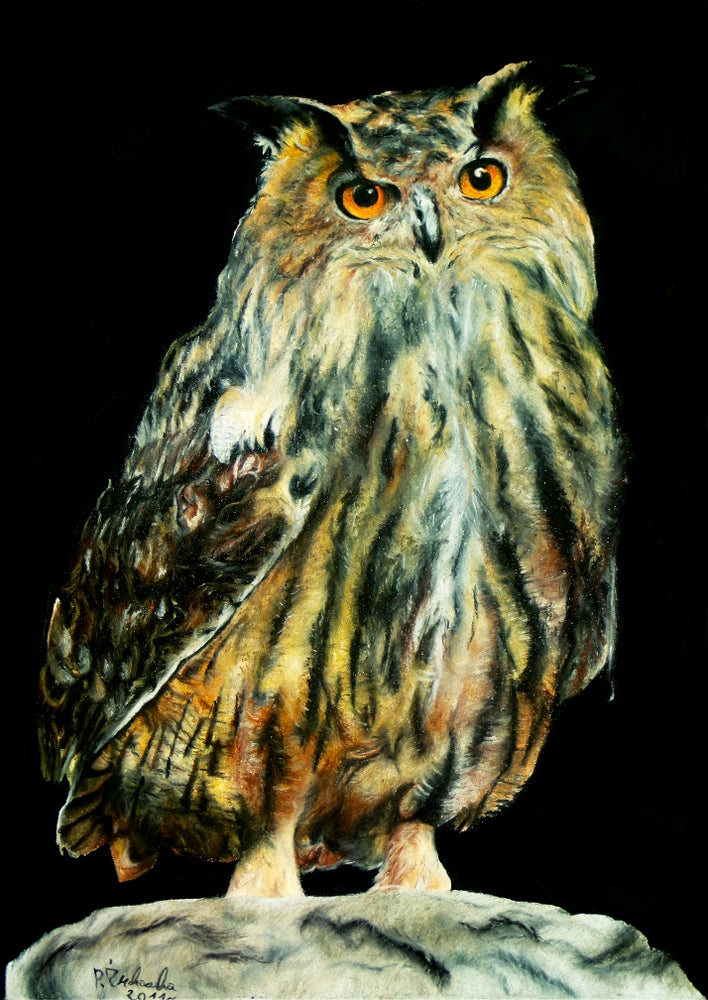 Image of Eagle-owl