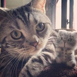 Image of Custom cat portrait plush