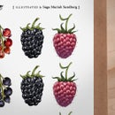 Image of Berry Label Set No1 - Garden berries