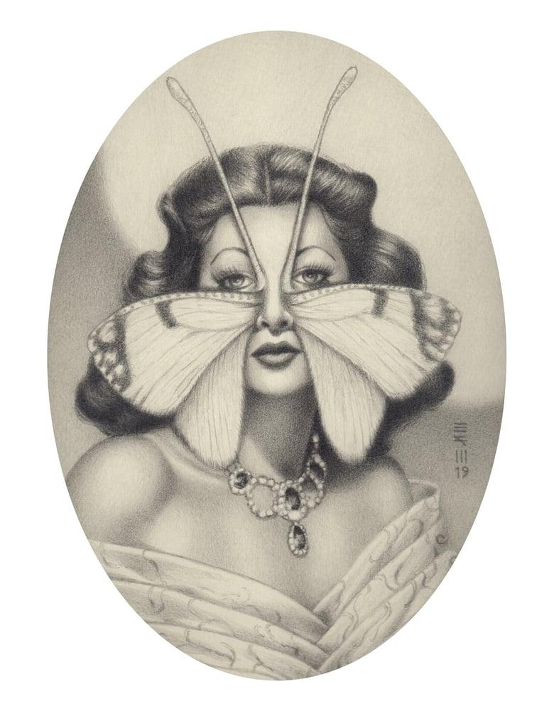 Image of Hedylida lamarri