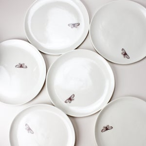 "Image of 10"" plates, set of six, with butterflies, ivory"