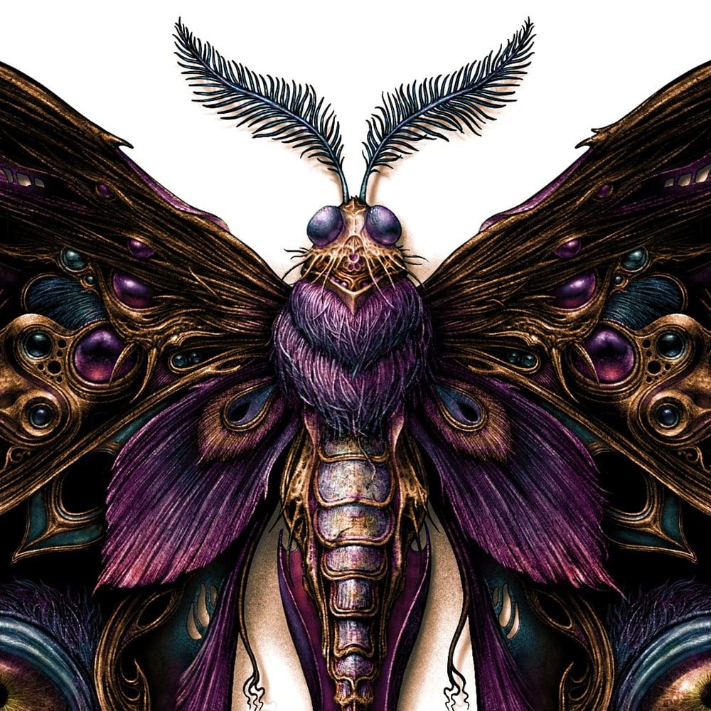 Image of L E P I D O P T E R A  2  Art prints