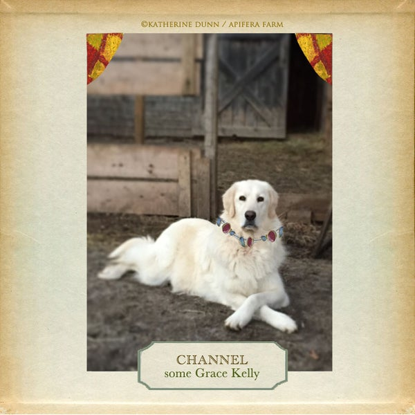 Image of Grace Kelly Dog