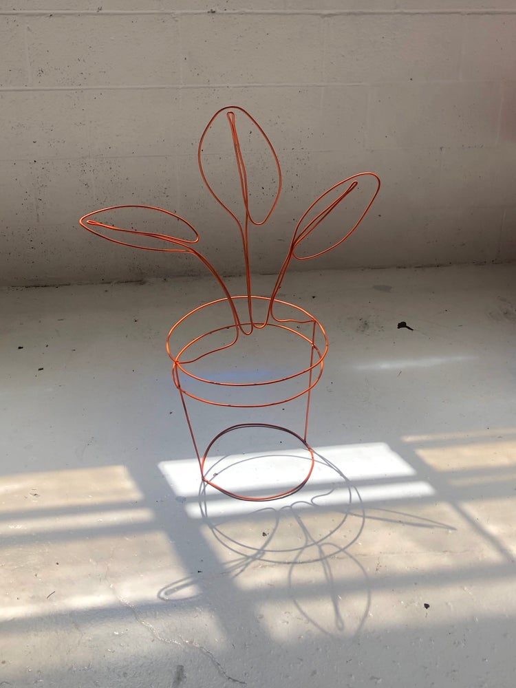Image of House Plant 1