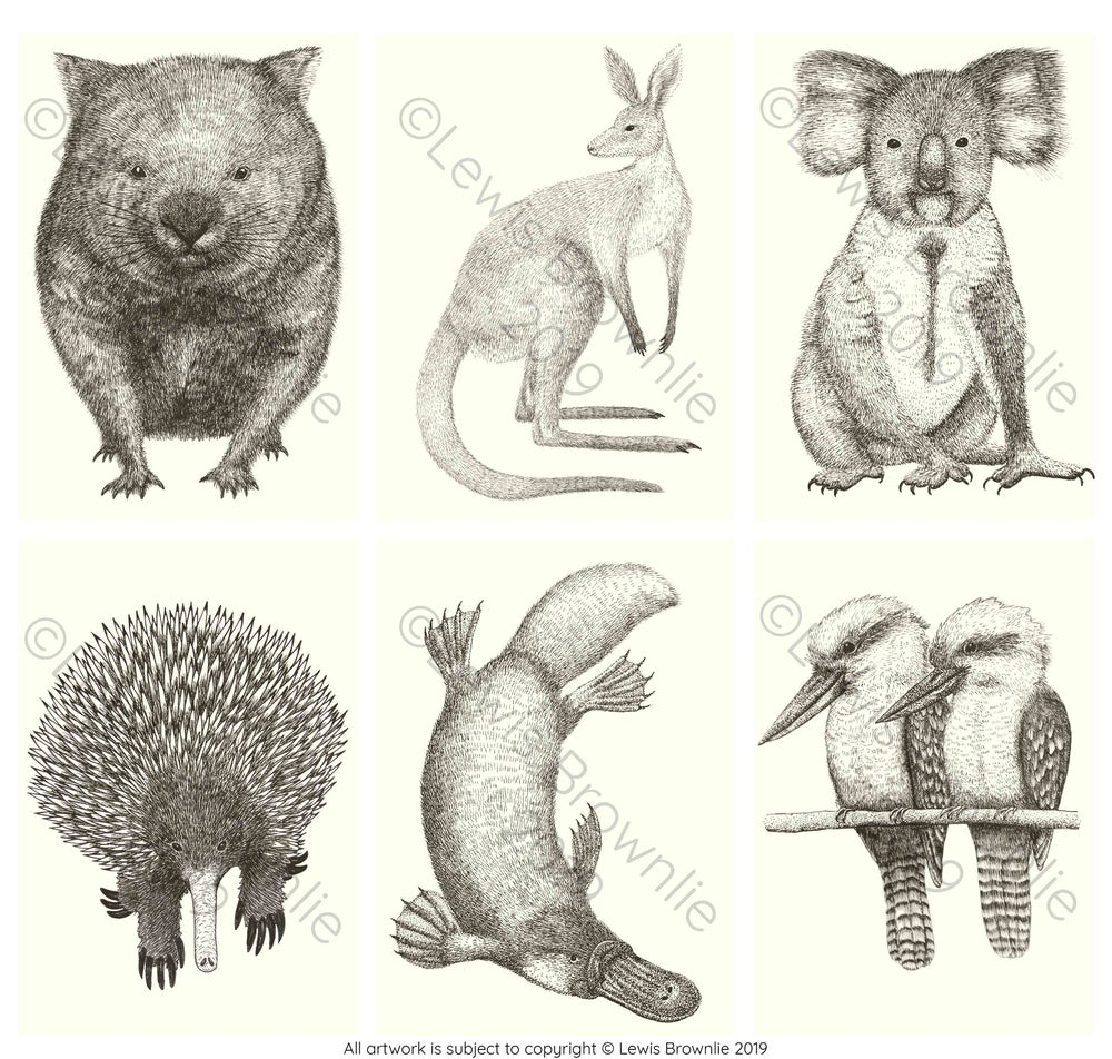 Image of Illustrated Australian Animal Postcards (6 pack)