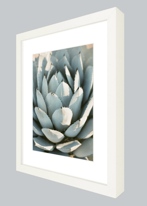 Image of Sun Kissed Agave