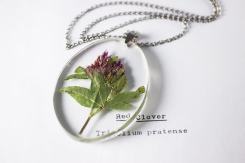 Image of Red Clover (Trifolium pratense) - Medium Oval #1