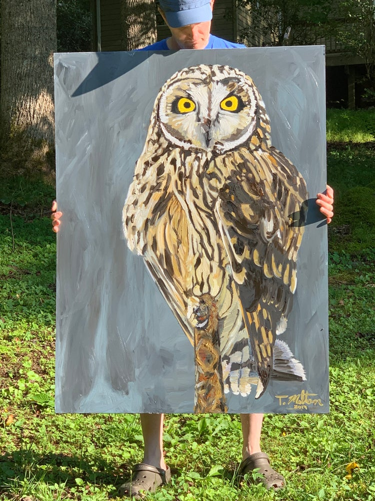 Image of Astute Owl