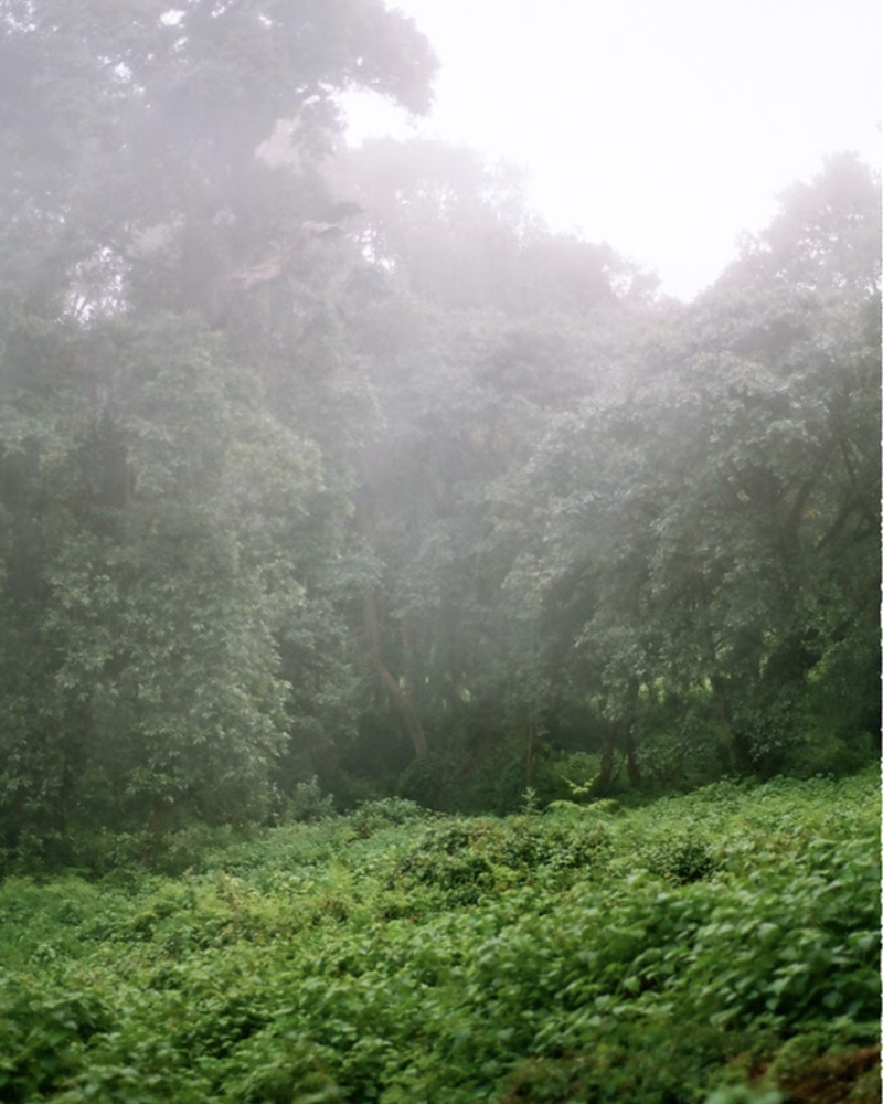 Image of Into the Clearing