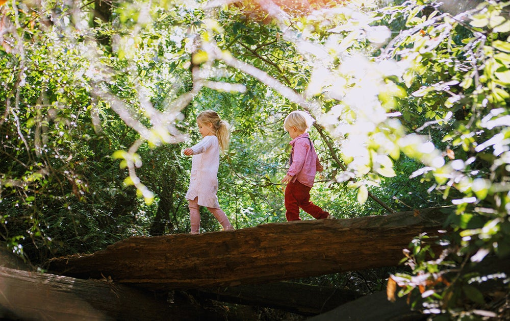 Image of August 24th Oakland Redwoods Mini Sessions