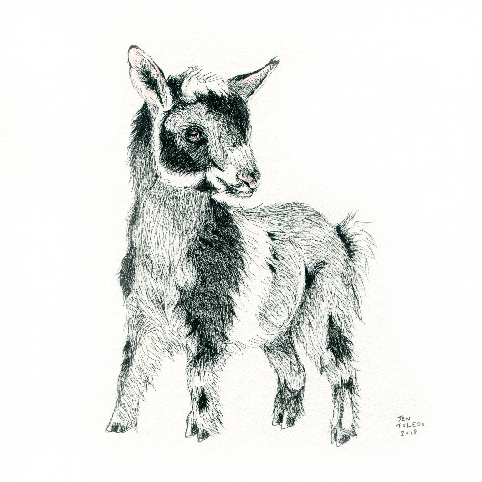 Image of Goat #1