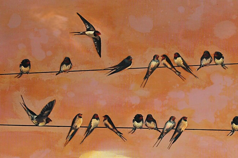 """Image of Original Canvas - Swallows at Dawn - 30"""" x 40"""""""