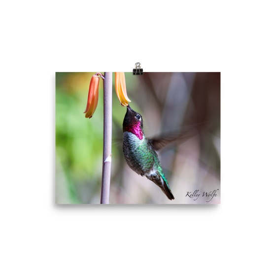 Image of Hummingbird 7