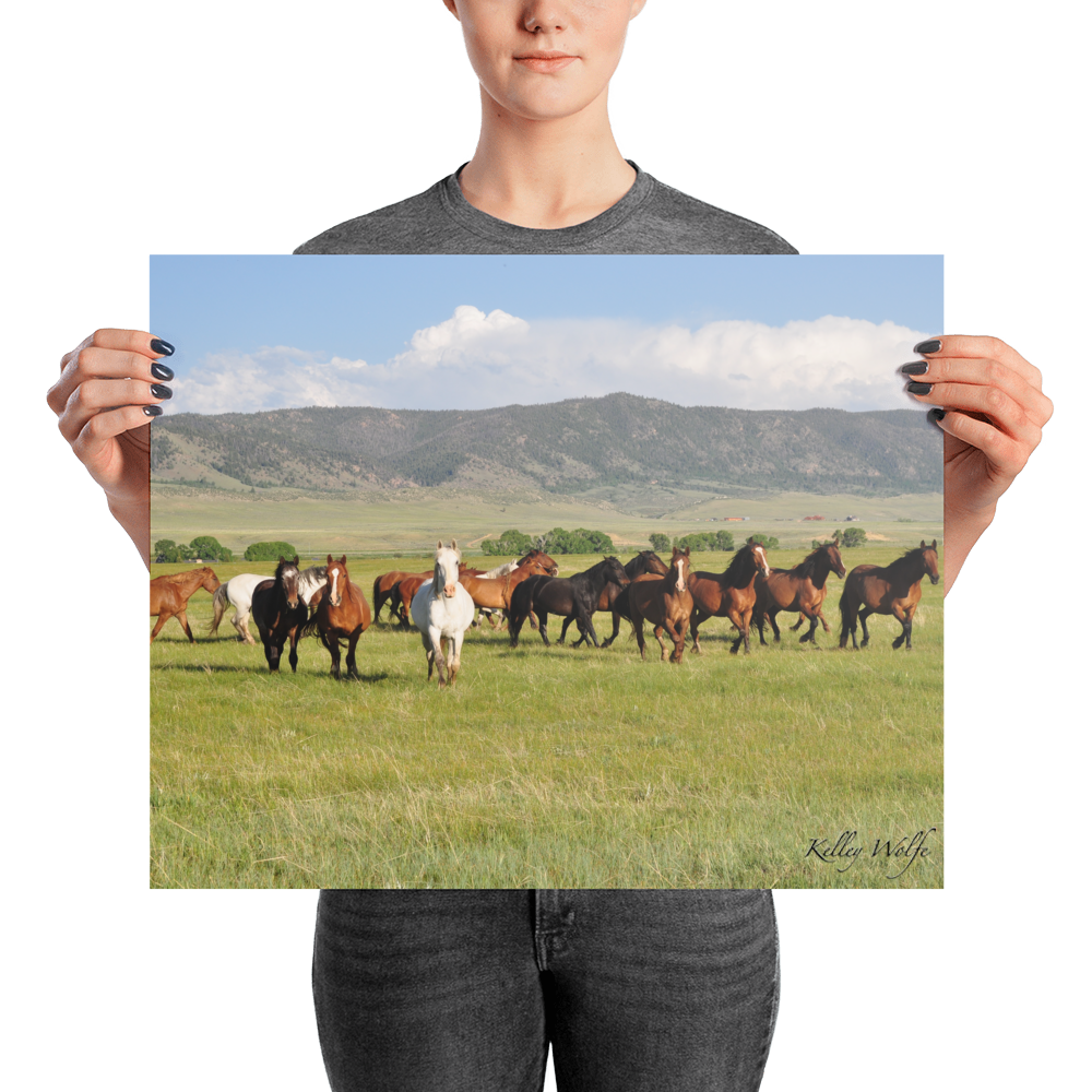 Image of Horses 1