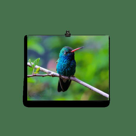 Image of Hummingbird 8