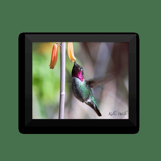 Image of Hummingbird 7 Framed