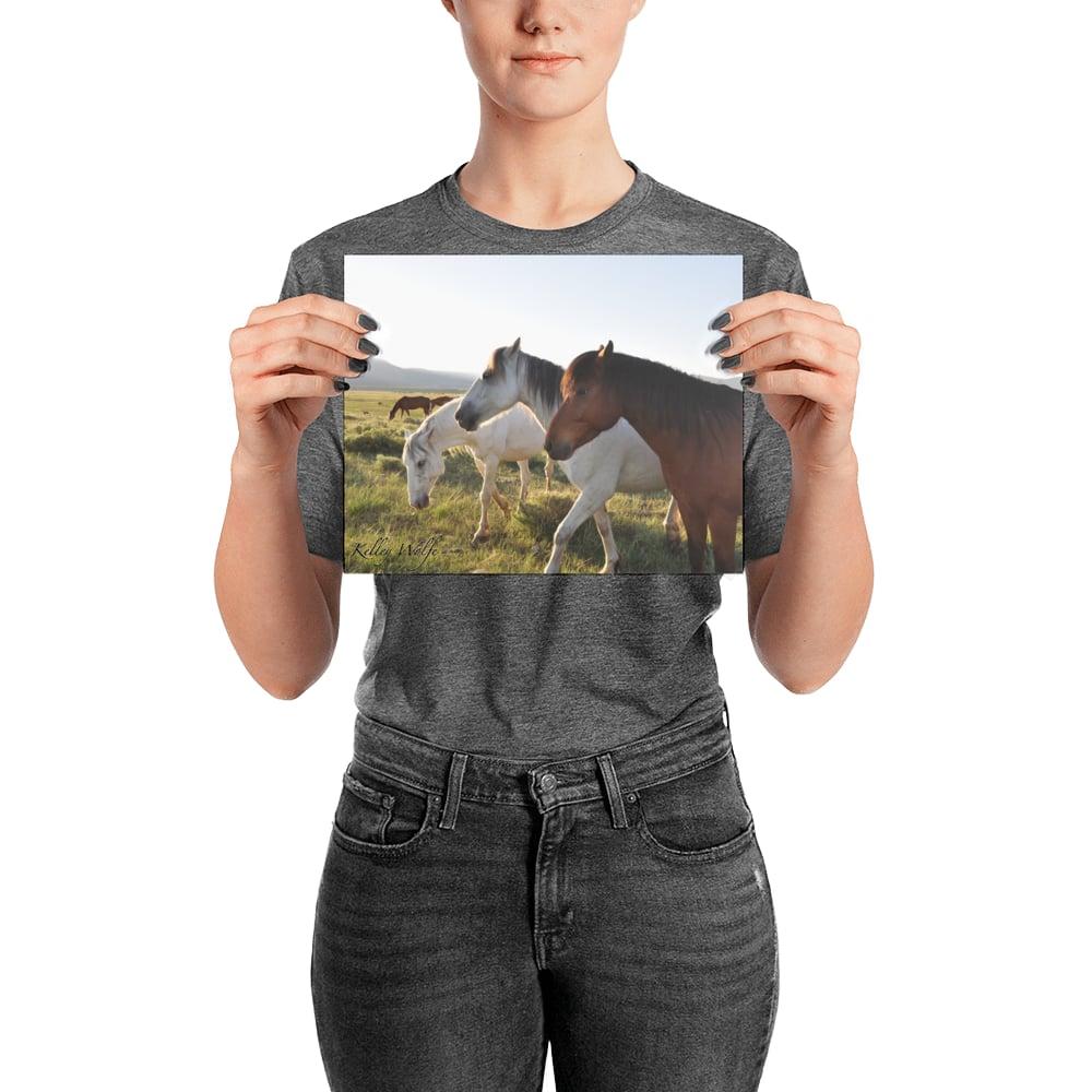 Image of Horses 7