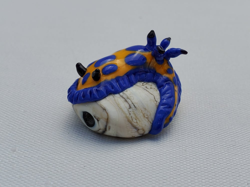 Image of Blue and Yellow Nudibranch