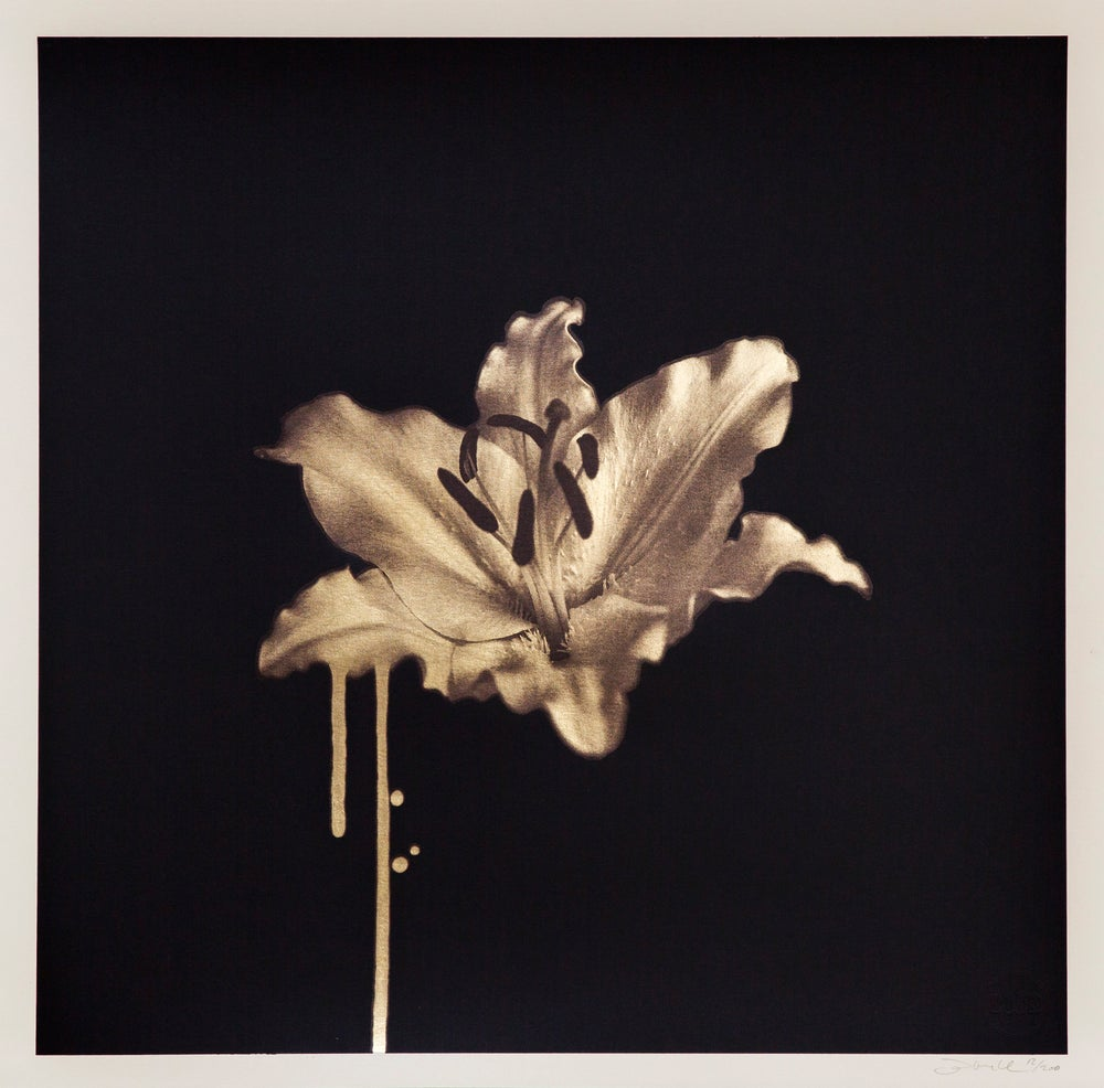 Image of Gilded Lily (Gold)