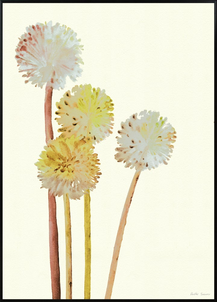 Image of Allium Yellow -  various sizes - prices from
