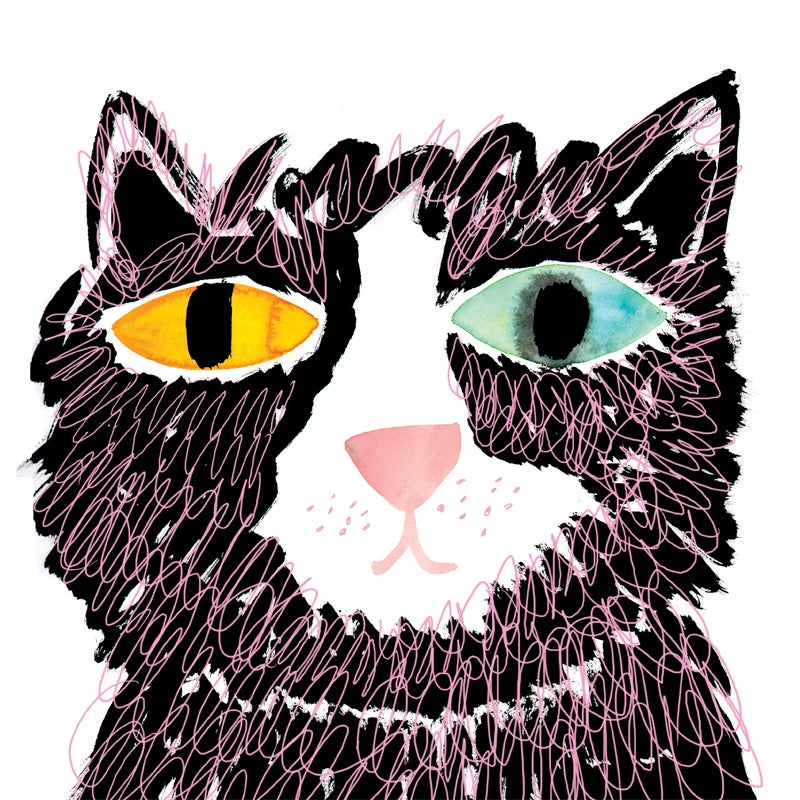 Image of Cat, 12x12 Print