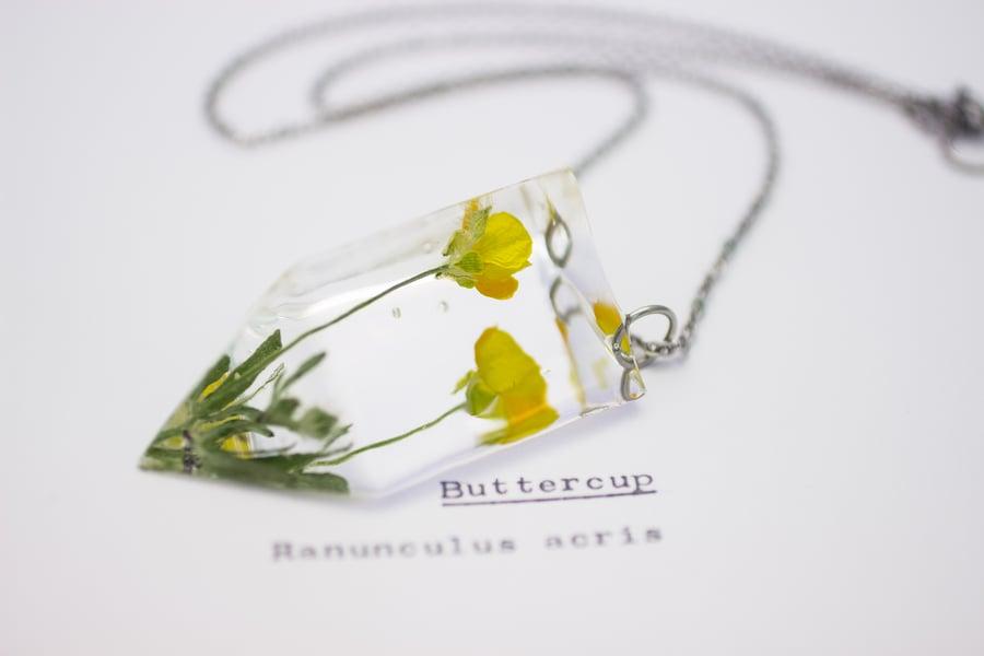 Image of Buttercup (Ranunculus acris) - Small #1