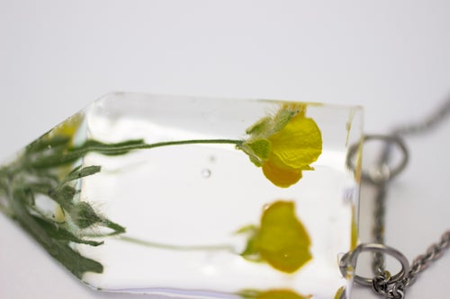 Image of Buttercup (Ranunculus acris) - Small #1