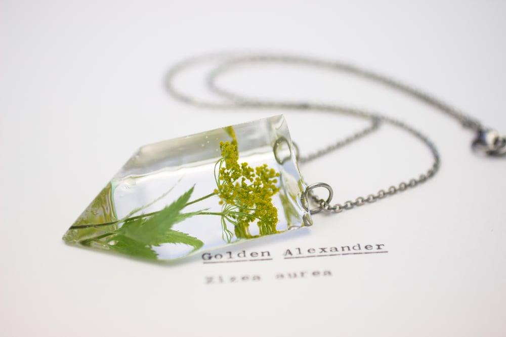 Image of Golden Alexander (Zizia aurea) - Small #1
