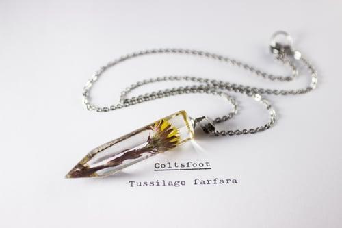 Image of Coltsfoot (Tussilago farfara) - Medium Crystalline Pendant #1