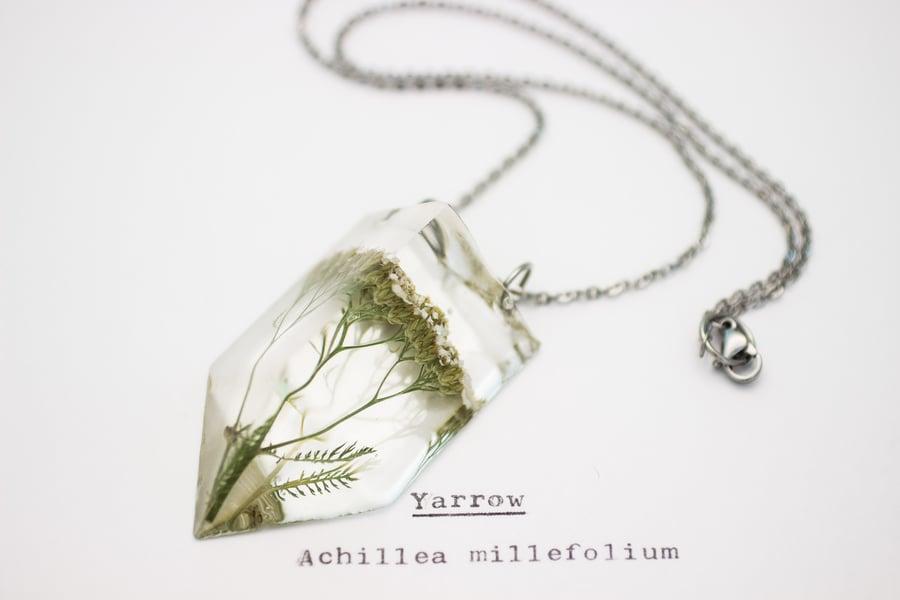 Image of Yarrow (Achillea millefolium) - Small #1