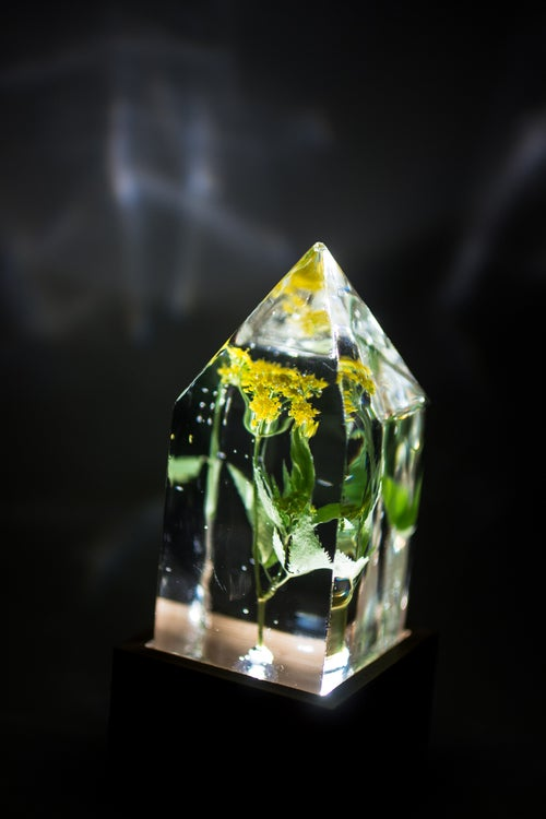 Image of Golden Alexander (Zizea aurea) - Floral Prism Desk Light #1
