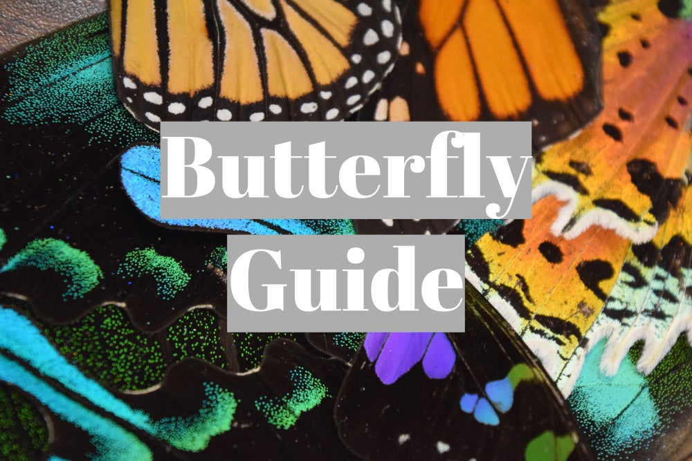 Image of Butterfly Guide