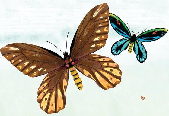 Image of Biggest Smallest Butterflies
