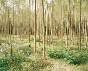 Image of bamboo forest one