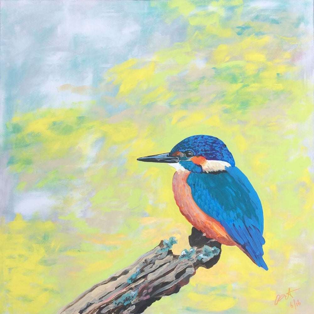 Image of Kingfisher