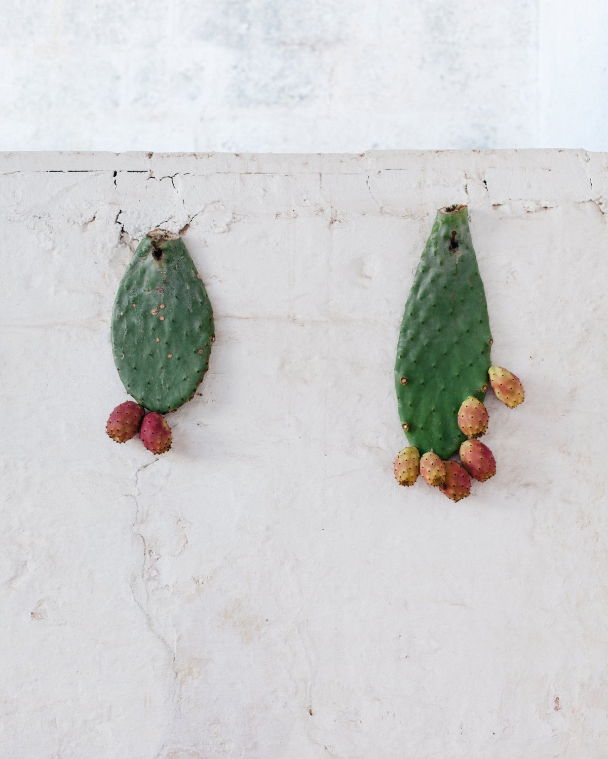 Image of Prickly pears in Puglia