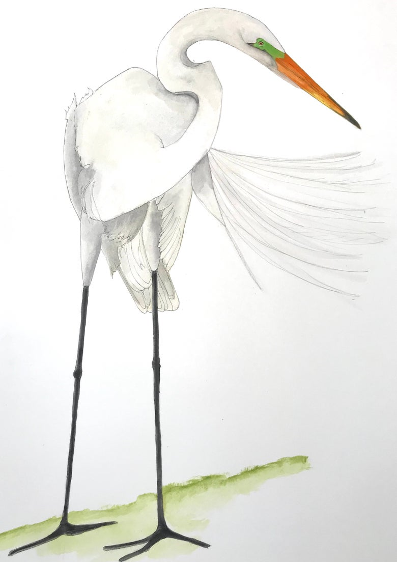 Image of My Great Egret