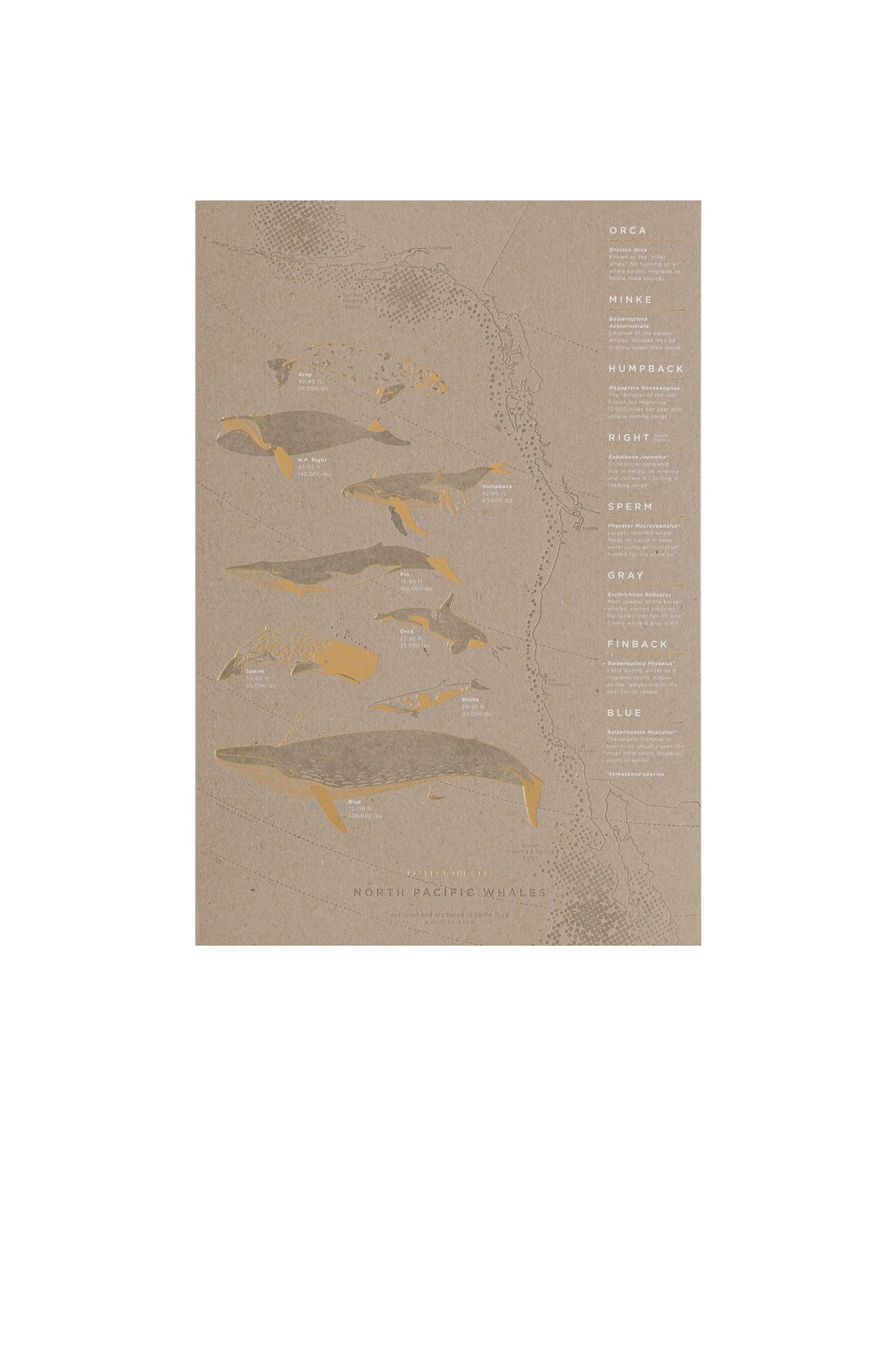 Image of North Pacific Whale Migration Letterpress Poster