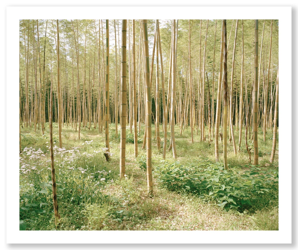 bamboo forest one