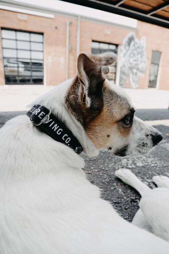 Image of Dog Collars