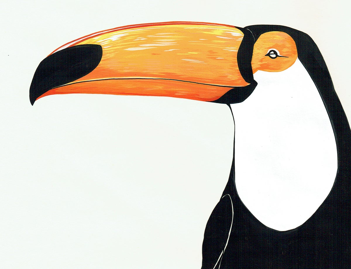 Image of After Audubon . Toco Toucan