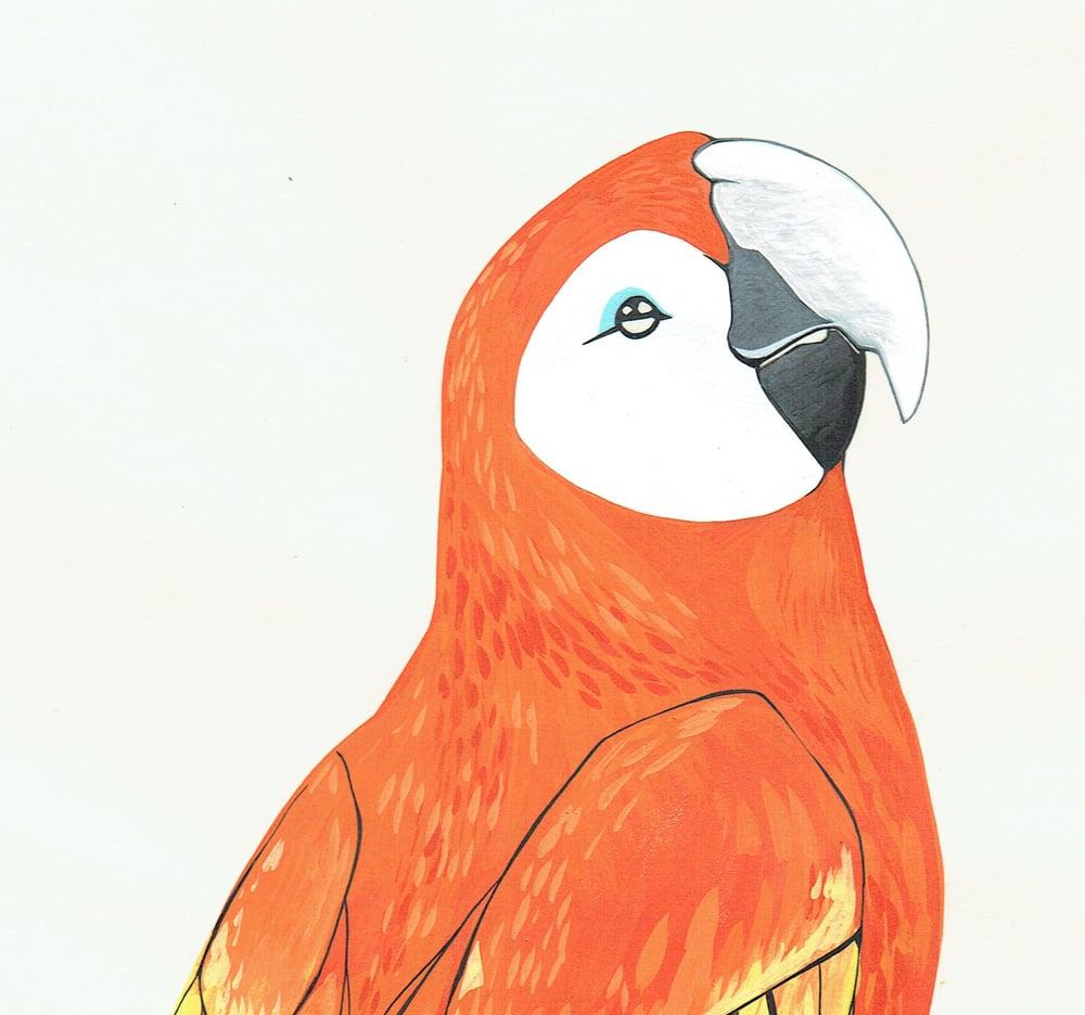 Image of After Audubon . Scarlet Macaw
