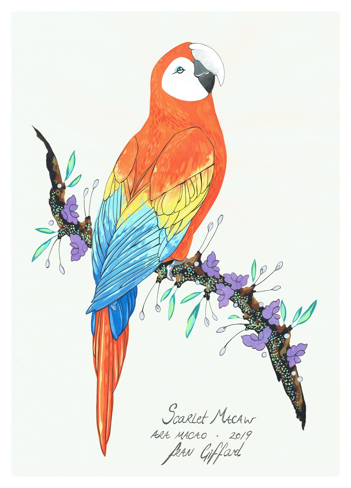 Image of After Audubon . Scarlet Macaw