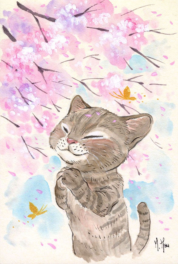Image of Cat Cherry Blossoms - Prints