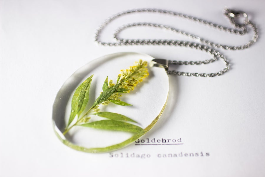 Image of Goldenrod (Solidago canadensis) - Large Oval #1