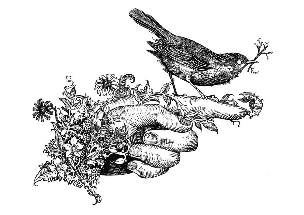 Image of A song bird of the peculiar parish