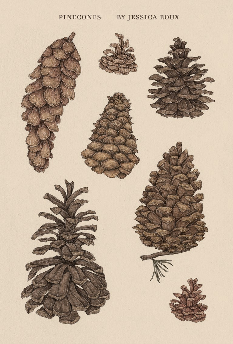 Image of Pinecones Sticker Sheet