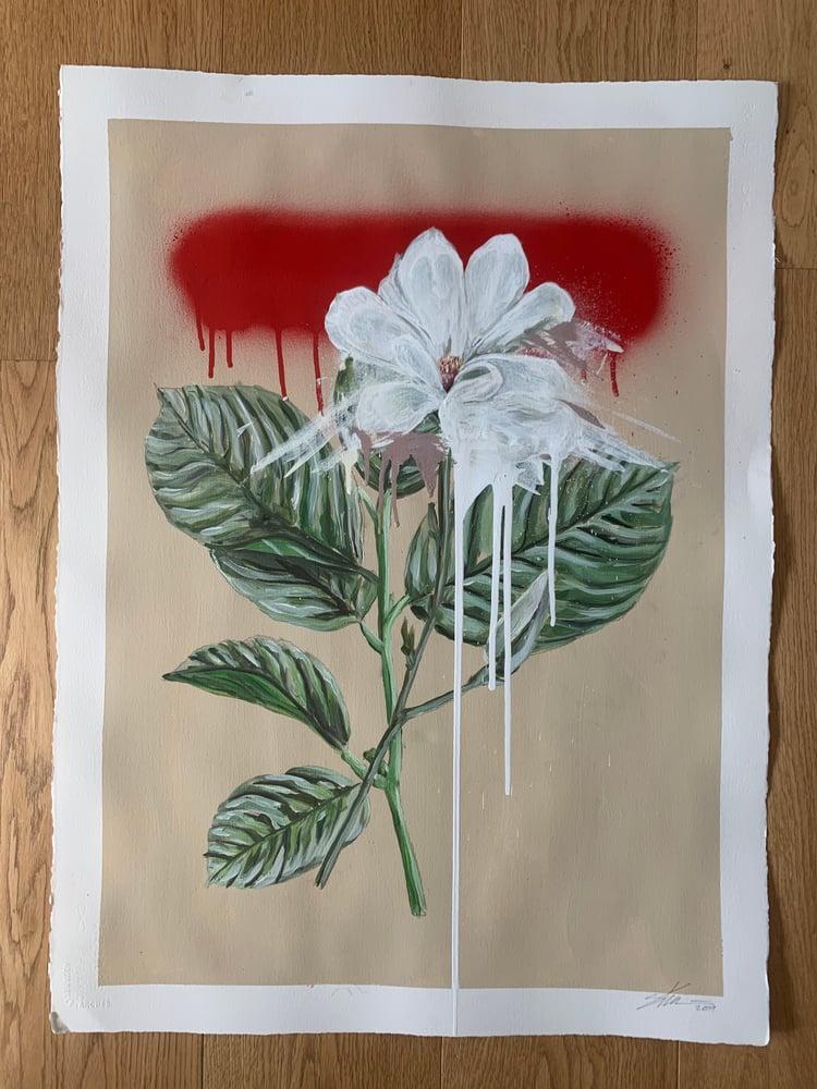 Image of Botanical number 03